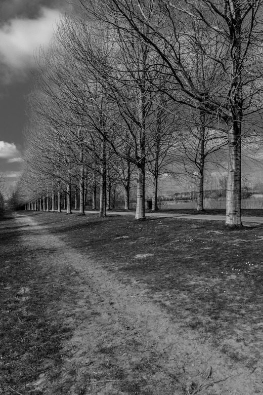 Boom 2 - Beeld gemaakt in park de Groene Weelde in de Haarlemmermeer. Geïnspireerd door Engelse Landschapschilder van de romantiek John Constable