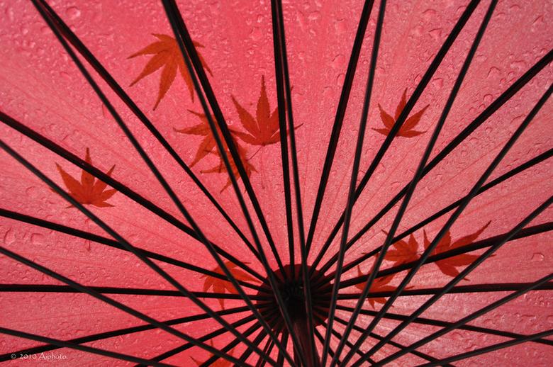 Regenachtig - Op een regenachtige dag aan het Westlake in Hangzhou, China. Regendruppels en blaadjes van de japanse esdoorn op de paraplu.