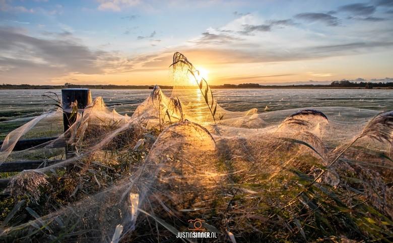Enorme spinnenwebben op Texel. - Enorme spinnenwebben op Texel, in 1 dag gemaakt, echt waanzinnig. Op een paar locaties op Texel zijn de webben te zie