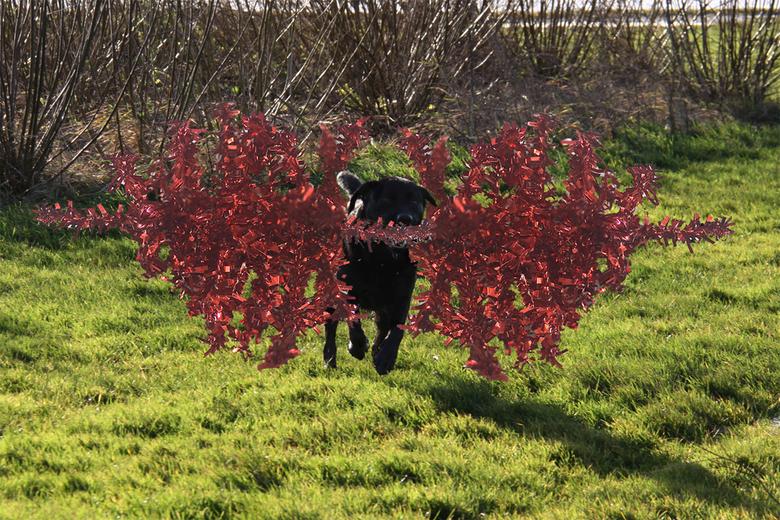 Bewerking: Bewerkingsuitdaging week 51-52 - Vandaag bij het wandelen komt onze Spike ineens met een kerstboom aanzetten!<br /> <br /> Fijne feestdag