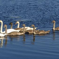 dieren serie 163. groot gezin.