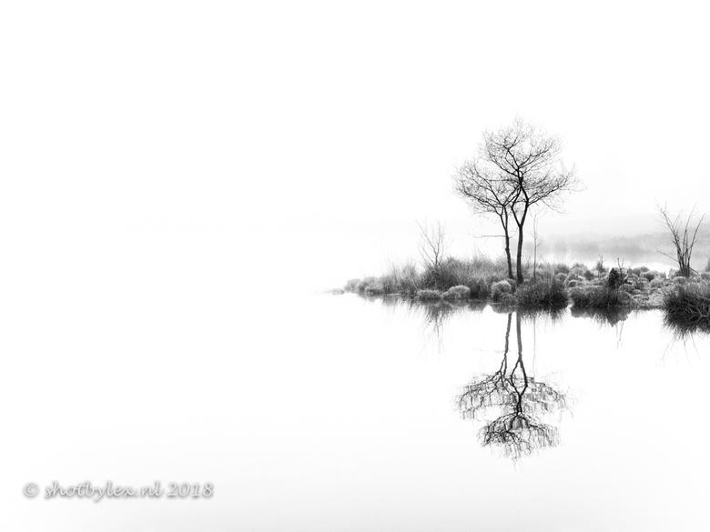 Twin trees, again