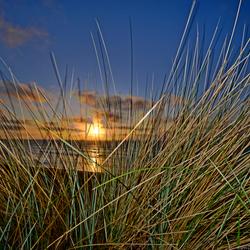 Beach-grass by sunset