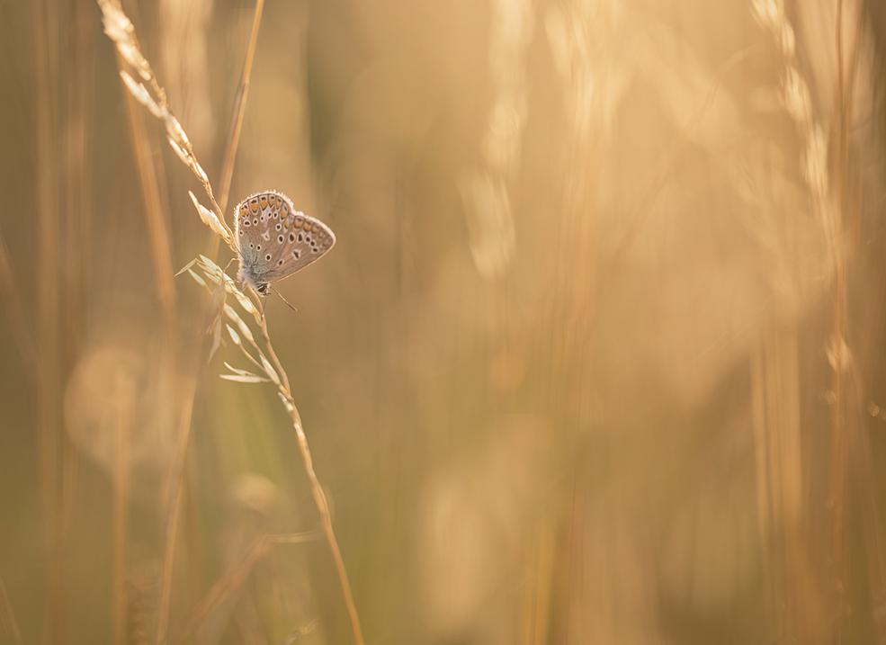 de avond valt,de vlinders zoeken een plekje om te gaan rusten
