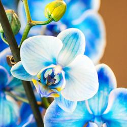 orchideeenhoeve