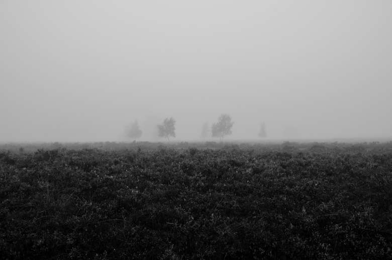Trees in the mist - It's been a while! Found some time to capture these trees on a very fogy autumn morning.