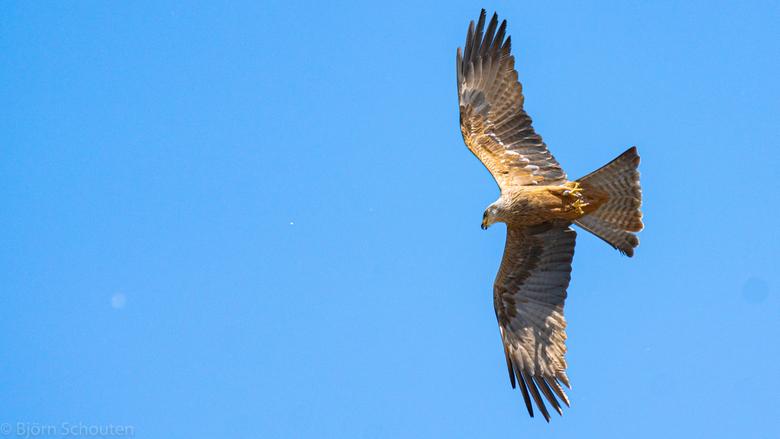 6F873780-5001-4D7E-B832-79296C3EDDBA - Ik vin deze foto ook mooi in de vlucht van de roofvogel in Blijdorp
