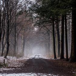 mist_MG_9811