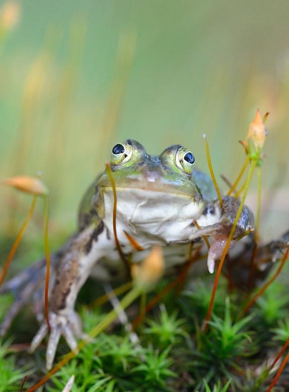 frog - mooi diertje keek me aan