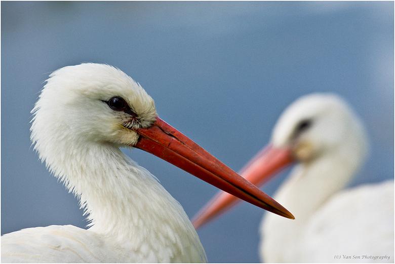 Rood-wit-blauw - Naar aanleiding van de documentaire serie Earthflight, waarin je de wereld werkelijk vanuit het vogelperspectief kunt bewonderen heb