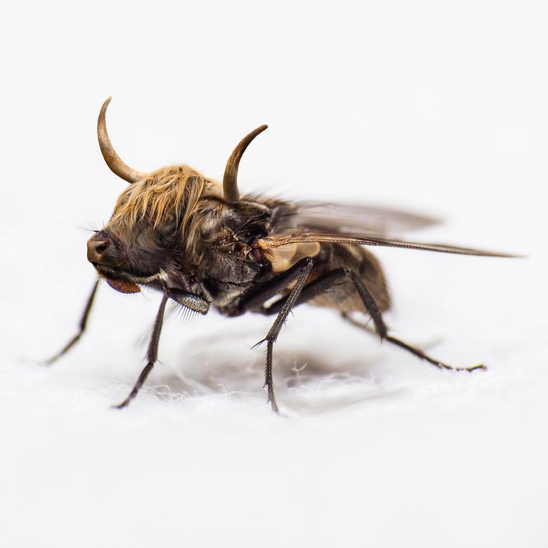 mug - Mug komt van unsplash