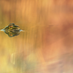 frog in the beautiful water
