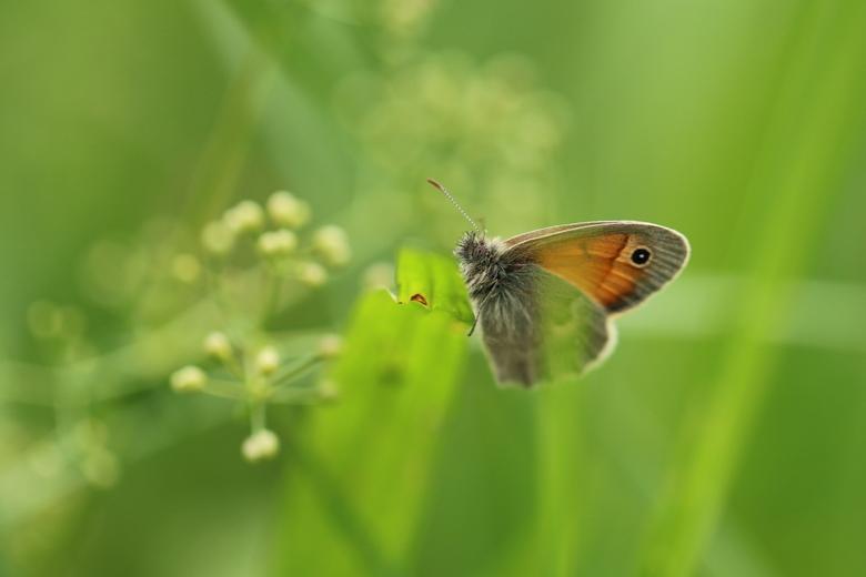Tussen het gras - Dit kleine hooibeestje maakte het mij niet makkelijk. Maar de aanhouder wint