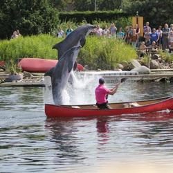 Dolfijnen in Harderwijk