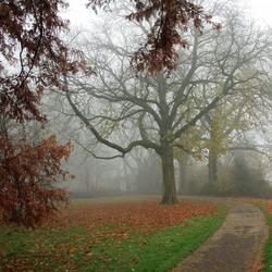Meppel in de mist/in het park