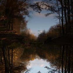 Autumn upside down