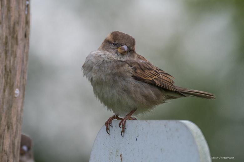 De wind door de Veren !! - The wind through the feathers !!<br /> The Zoo , Holland .<br /> Nikon D500 - Nikon 80-400mm .