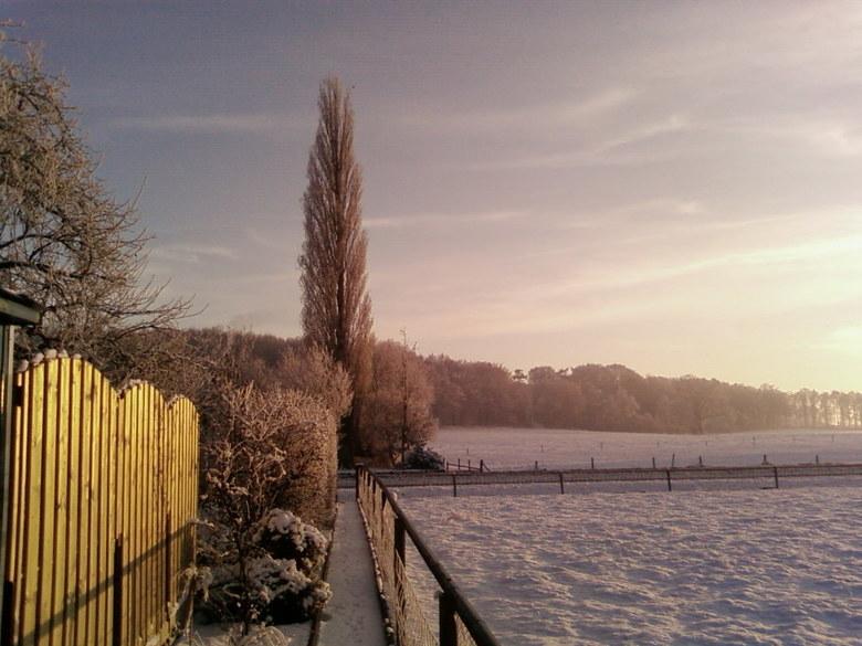 Snow evening -