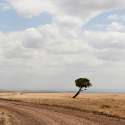 Masai Mara Road