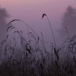 Voor zonsopkomst