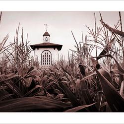 Children of the corn...