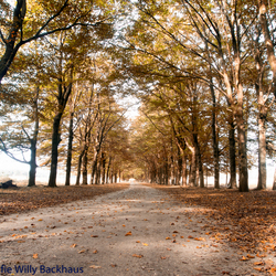 Indian Summer in Holland