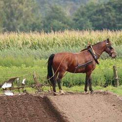 boer met ploeg
