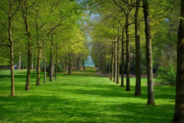Lange laan. - Landgoed de Haere.<br /> <br /> Bij Deventer.