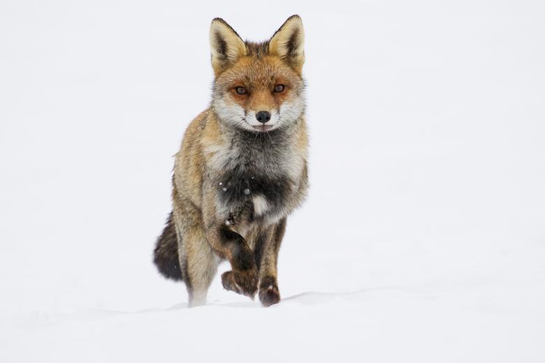 Walking in a Winterwonderland.