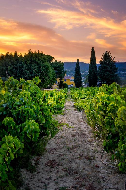In de Wijngaard