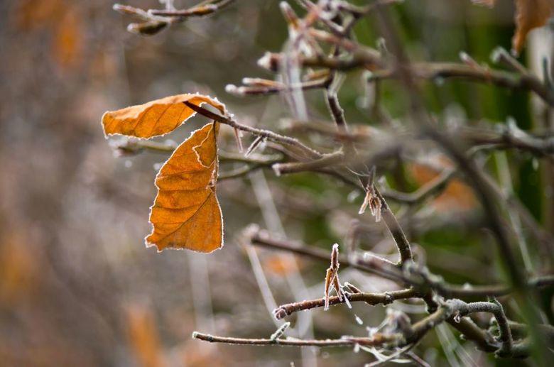 Winterse bladeren - Toch nog een paar bladeren gespot laatste winter.