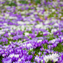 Het is altijd lente..