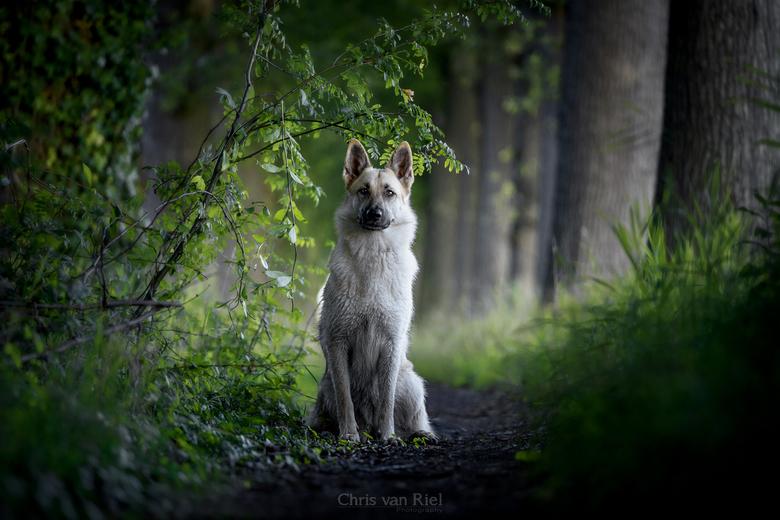 Nouk in het donkere bos -