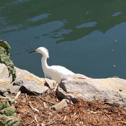 White Birdy