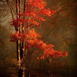 Melodies of Autum