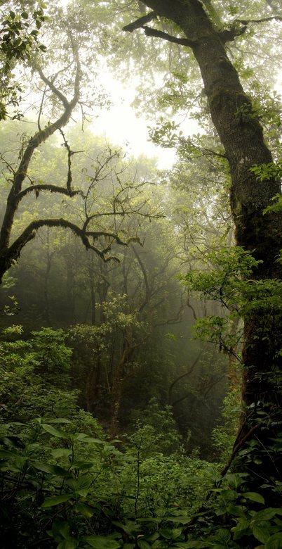panorama bos madeira - in madeira in het bos bij Queimadas (in de buurt van Santana) gewandeld. Het bos ligt aan de noordkant van het eiland op een go
