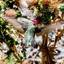 Mannetjes kolibrie