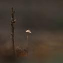 paddenstoelenzoomdag 2017