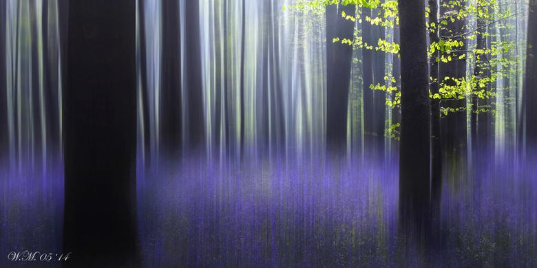 Haller fantasy - Ik heb mijn fantasie op dit prachtige bos losgelaten.<br /> Geweldig om in Halle te mogen zijn....<br /> <br /> exif: f 18, 1/10 s