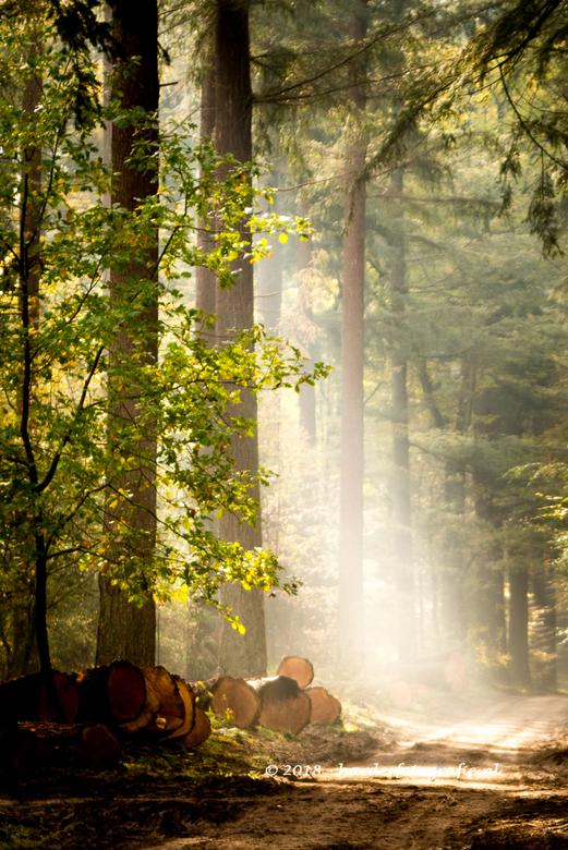 Lichtinval - Het licht schijnt mooi door de bomen heen, wat zorgt voor een dromerig beeld met nevel.<br /> Zelfde plek als de vorige foto, alleen and
