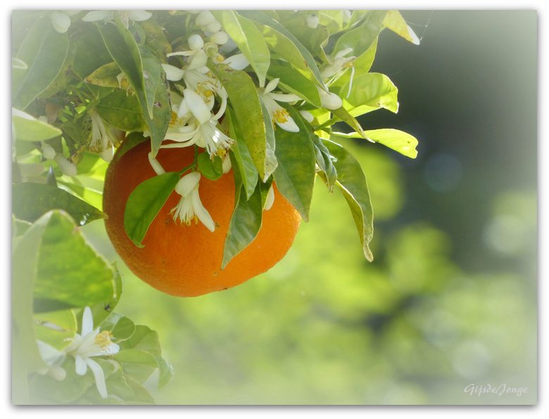 Naranja Ibiza - Hoi hoi Zoomers,<br /> <br /> Tijdens een korte tripje in Ibiza genoten van veel zumo naranja&#039;s maar deze hangt hier nog lekker