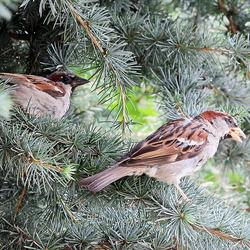 Vogels in de Tuin 6
