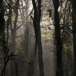 Vroeg zonlicht door de bomen