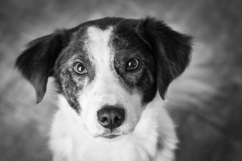 Trouwe hondenogen -