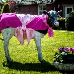 La Mucca Rosa