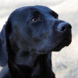 Vraagje aan hondenliefhebbers