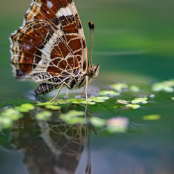 Vlinder reflecties