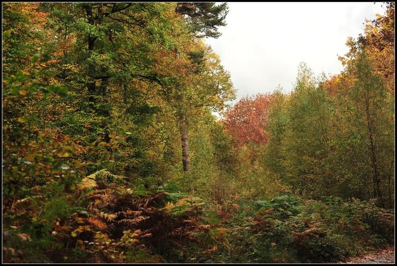 Herfstige Ardennen