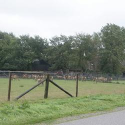 herten