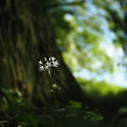 Daslook - fotowedstrijd puur natuur inzending 2